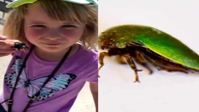 小女孩发现新种昆虫,以己名字命名
