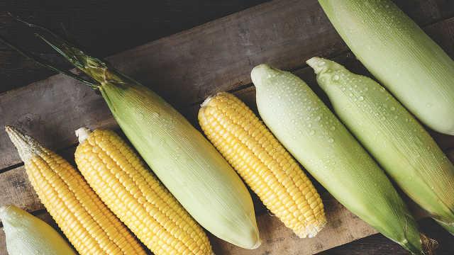 从粮食到燃料,玉米的究极进化之路