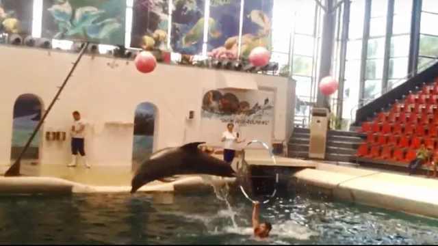 心痛!出生9天小海豚表演过程猝死
