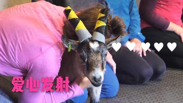自虐健身 :顶30斤肥羊做俯卧撑