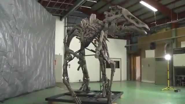 日本确认恐龙新物种:取名恐龙之神