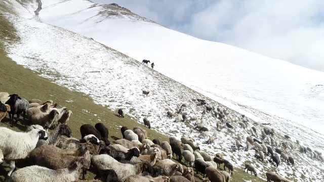 新疆大草原降雪,气温骤降至零下4度