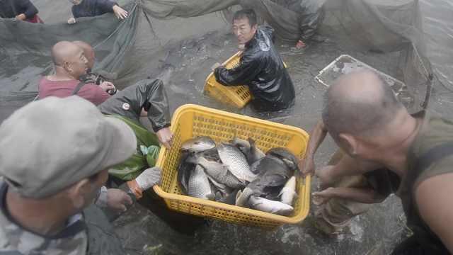 村庄捕上万斤大鱼,村民排队免费领