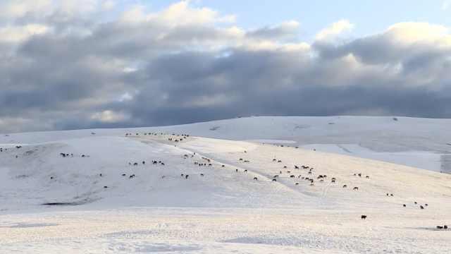 绝美!新疆2800平方公里大草原降雪