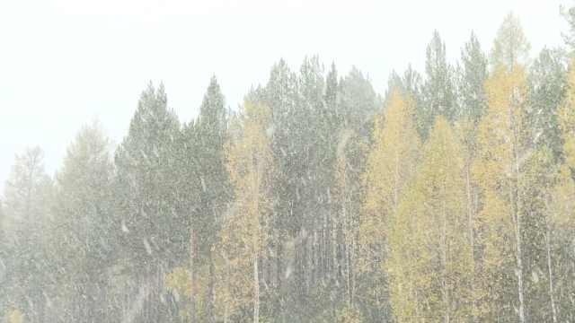 美哭!漠河迎入秋首雪,比去年早25天