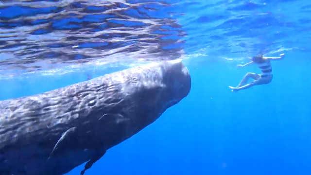 网红摄影师与鲸鱼宝宝亲密接触