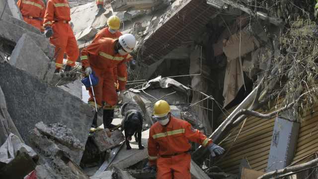 汶川地震功勋犬当初搜救时曾不适应