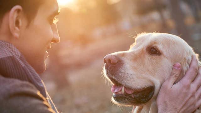 新研究:养狗可以降低24%早死风险