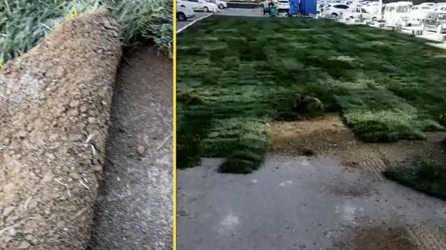 应付绿化验收?小区柏油路铺上草坪