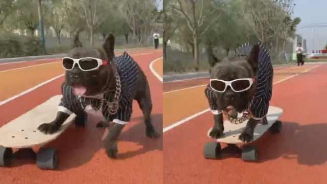 斗牛犬玩滑板溜到飞起,会拐弯避障