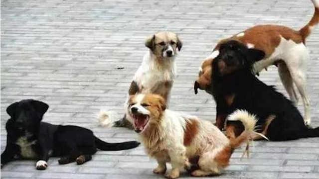 超14天无人领养流浪犬可安乐死?