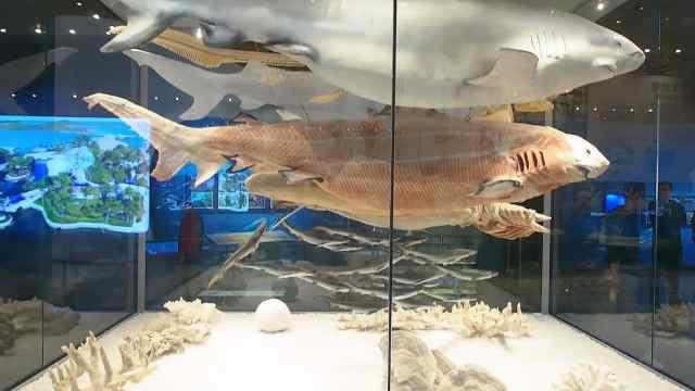 国家海洋博物馆今日海洋展区
