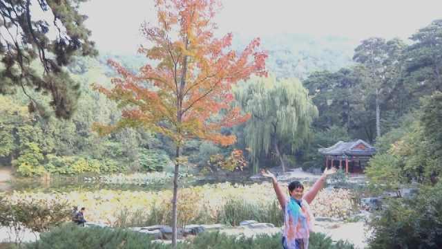 游客赴香山赏红叶:万绿丛中一点红