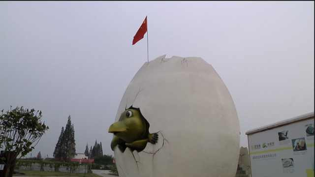 小伙辞金饭碗卖宠物龟,做全国第一