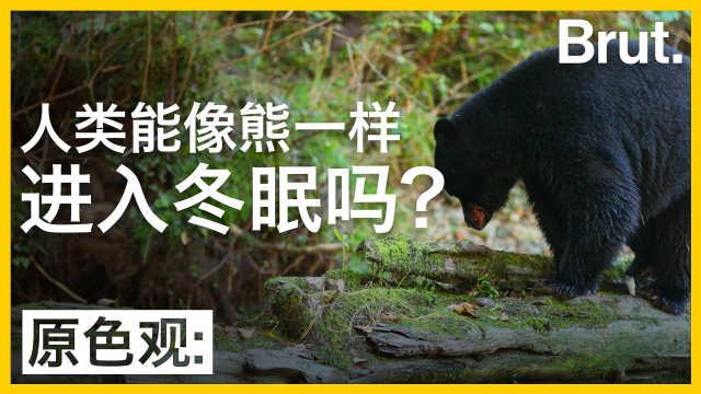 人类能像熊一样进入冬眠吗?