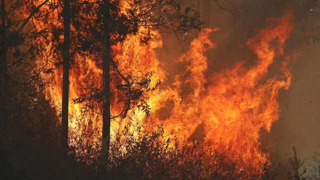 澳洲山火肆虐,或致上百只考拉丧生