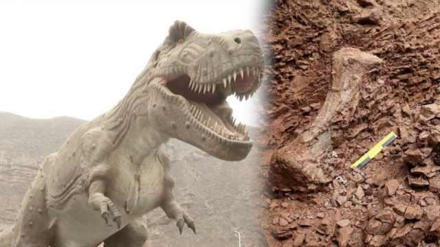 甘肃永靖再次发现巨型恐龙骨骼化石