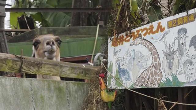 直播:动物都抑郁了!日本动物园被关