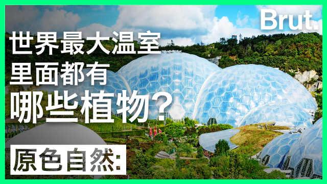 这座世界最大温室,里面什么样?