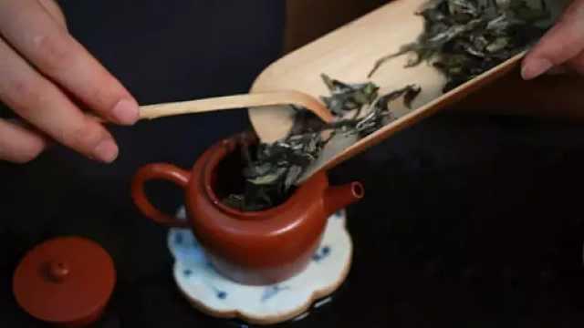 一见倾心,她对茶有多着迷?