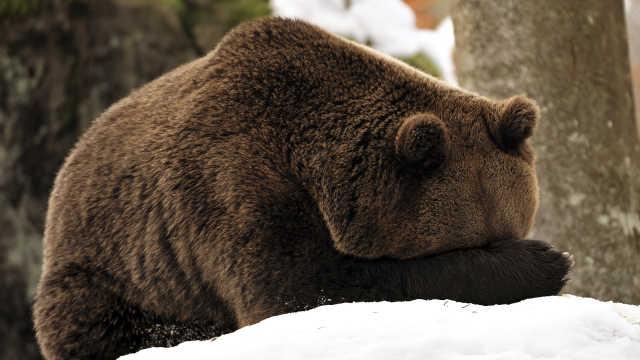 冬眠动物基因中或有治疗肥胖的线索