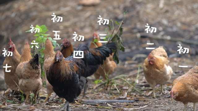 囤活鸡盼年!广西人过年一天一只鸡