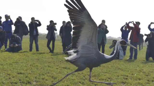 壮观!近300只候鸟在鄱阳湖放飞回家