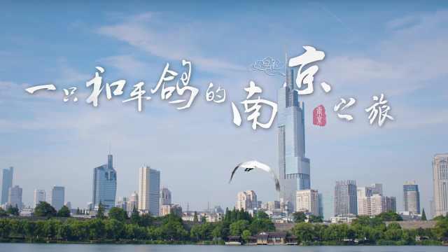 一只和平鸽的南京之旅