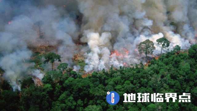 亚马逊雨林之殇:人类终将自食其果