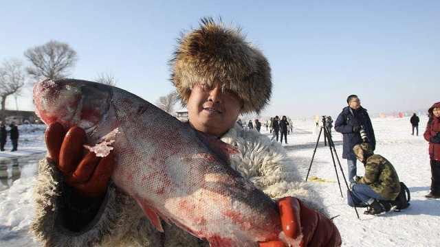 直播:万斤活鱼跃冰出!冬捕头鱼拍卖