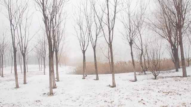 来到凤栖湖感受最美冬景