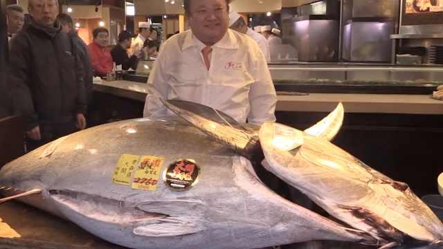 日本鱼王拍出1.9亿天价成史上第二