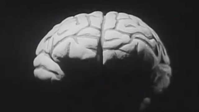 新研究揭秘如何将大脑保存千年