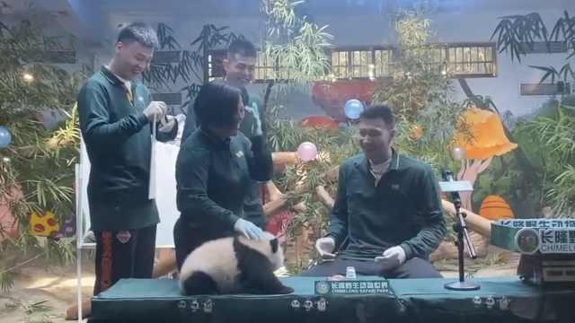 笑哭!易建联被熊猫宝宝吓出表情包