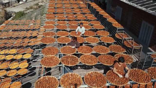 柿子丰收4万斤,老伯晒起做柿饼