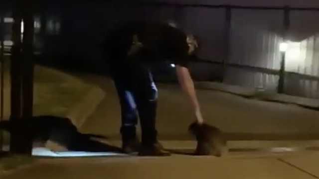 """泪!澳洲警察为迷路的考拉""""指路"""""""