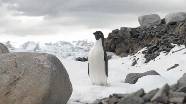 南极过去五年损失1.5万亿吨冰