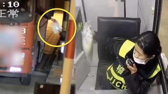 司机过站递1包防护手套,小姐姐笑了