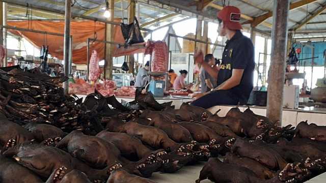 印尼呼吁暂停食用蝙蝠等野生动物