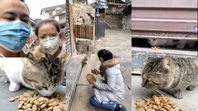流浪猫无处觅食,夫妻疫期坚持投喂