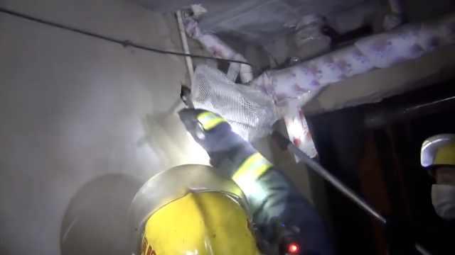 小区地下室现蝙蝠,消防员抓走放生