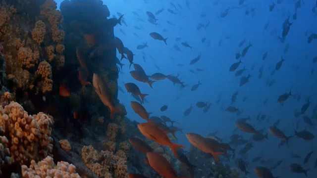 在以色列海豚礁见证绝美海底世界
