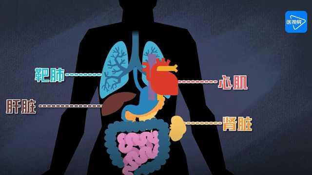 为何有人患新冠肺炎后会迅速死亡?