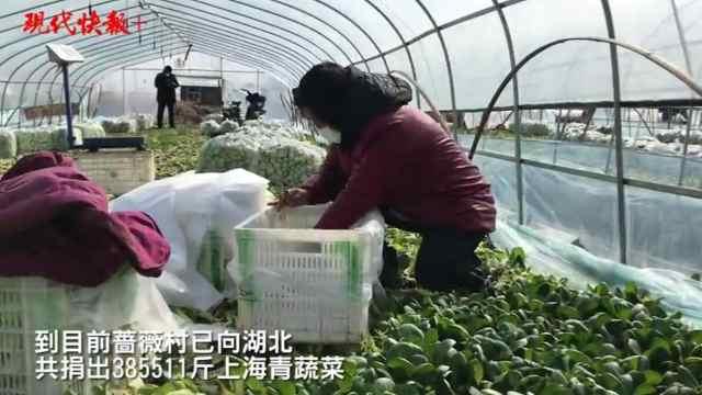 """江苏蔷薇村38万斤""""上海青""""捐湖北"""