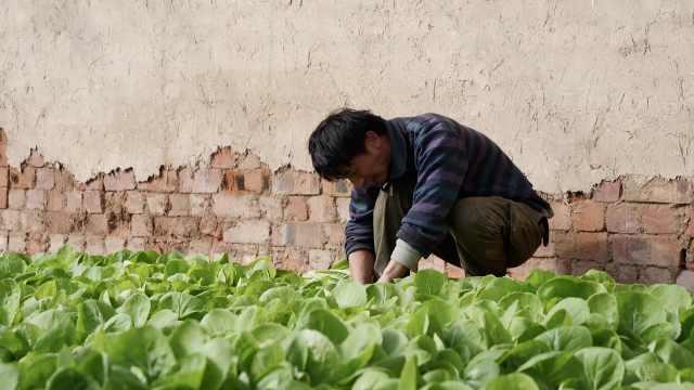 农户蔬菜滞销,驻村干部变身推销员