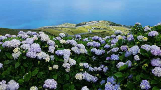 仙岛周游记(4):大洋深处花成海