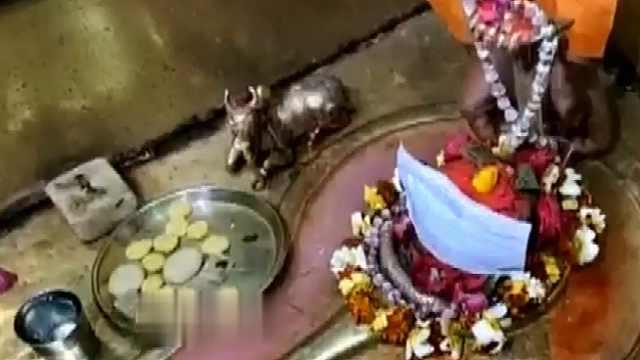 印度寺庙给神像戴口罩祈求疫情结束