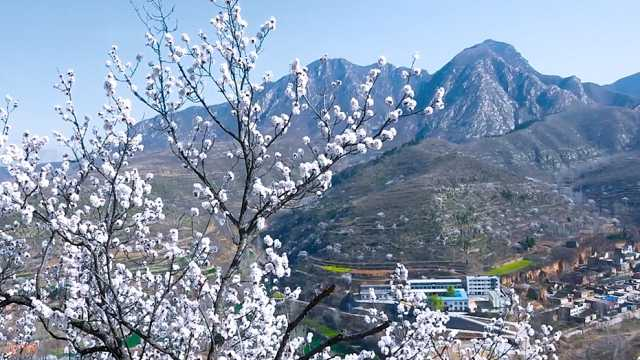 汝州大峪,杏花微雨春风十里