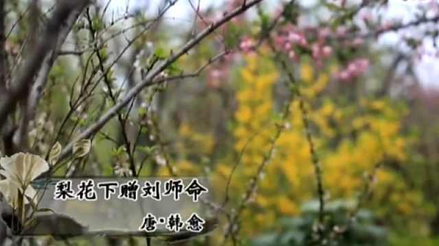 清明诗会《梨花下赠刘师命》