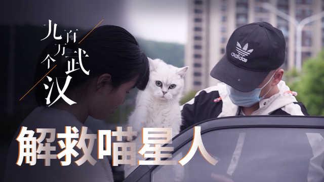 解救喵星人!武汉留守猫已经饿到吃猫砂、火锅底料了